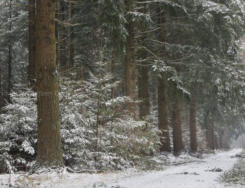 Koud winterweer op komst!